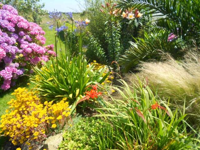 mon petit jardin plougoulmois 22_07_11