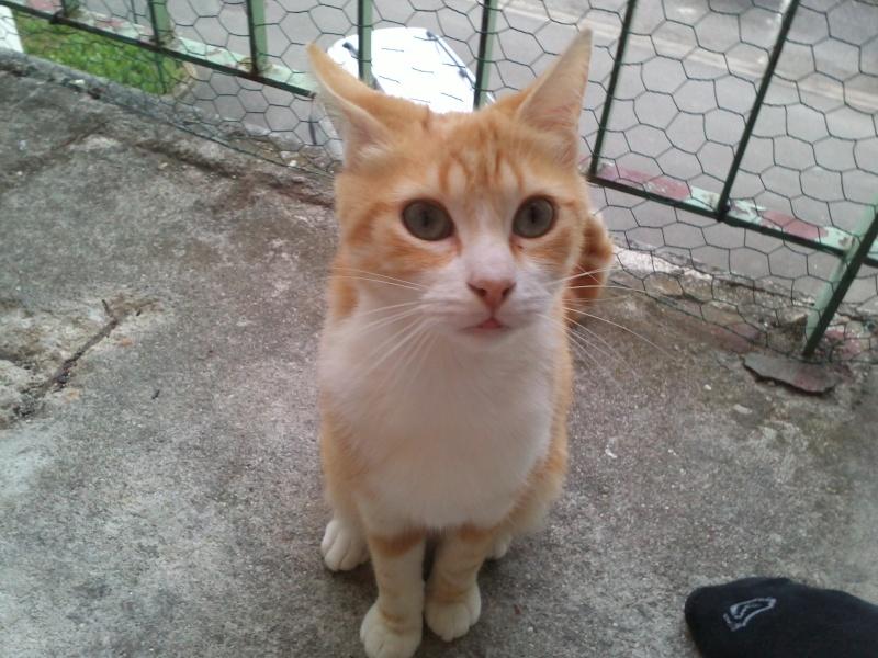 Adrien et son Garfield Img11810