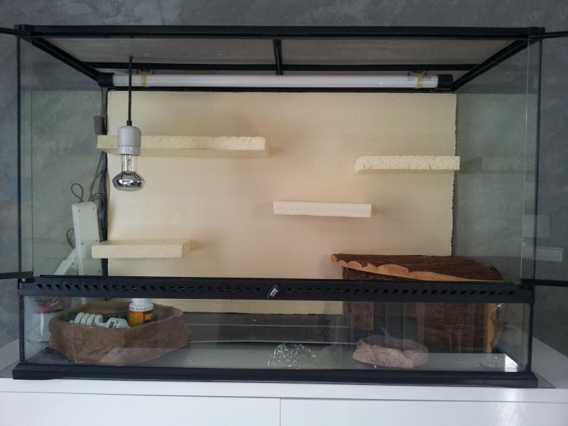 preparation terrarium 20120811