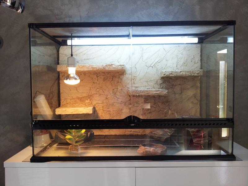 preparation terrarium 20120813
