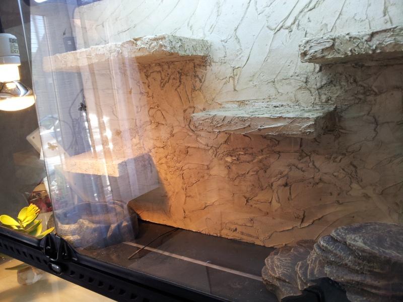 preparation terrarium 20120814