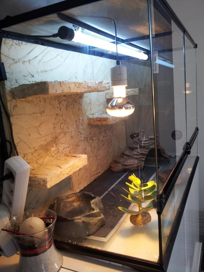 preparation terrarium 20120815