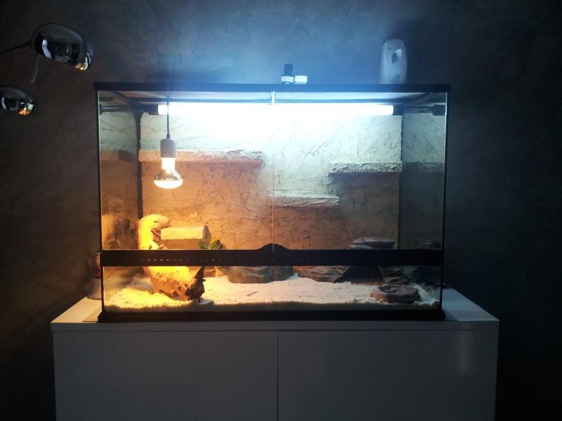 preparation terrarium 20120816