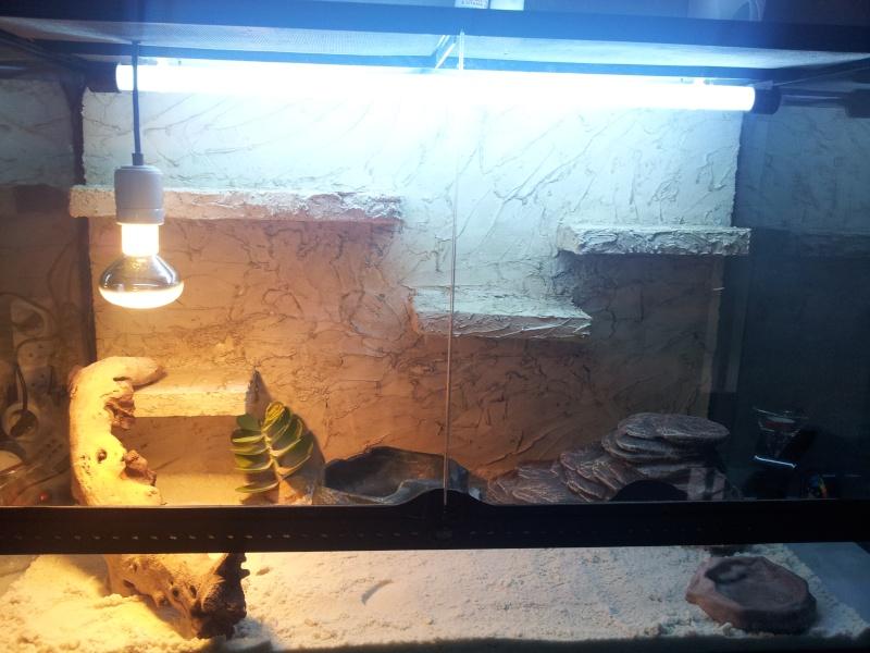 preparation terrarium 20120817