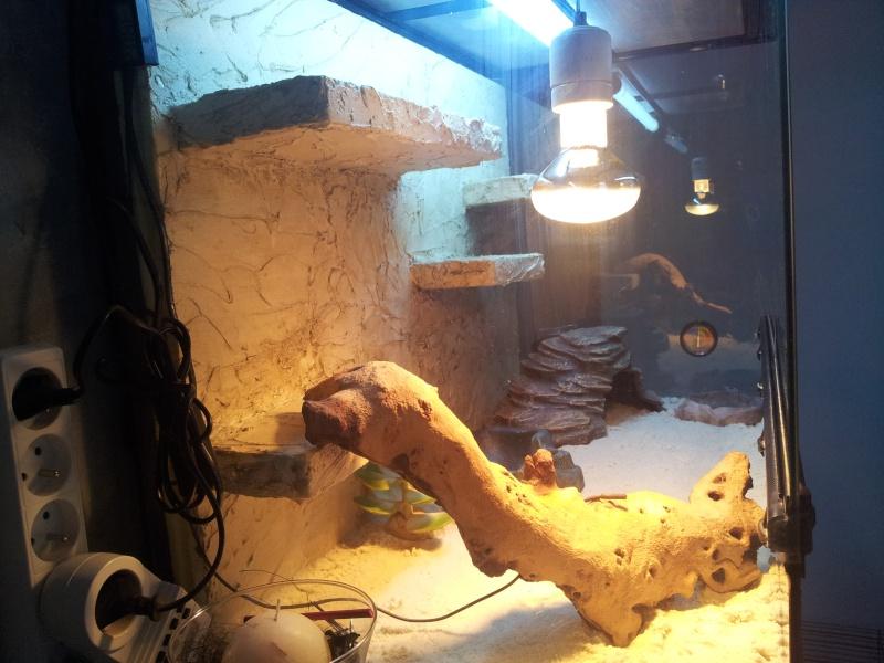 preparation terrarium 20120818