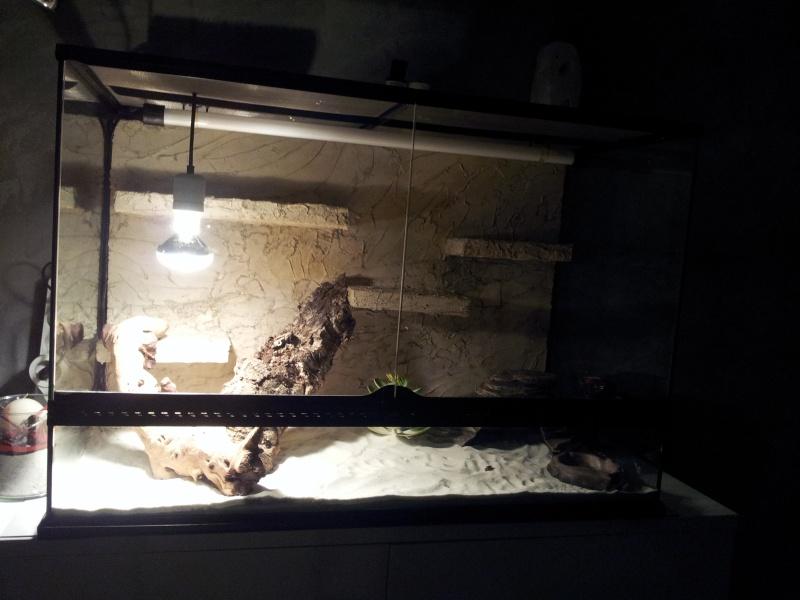 preparation terrarium 20120820