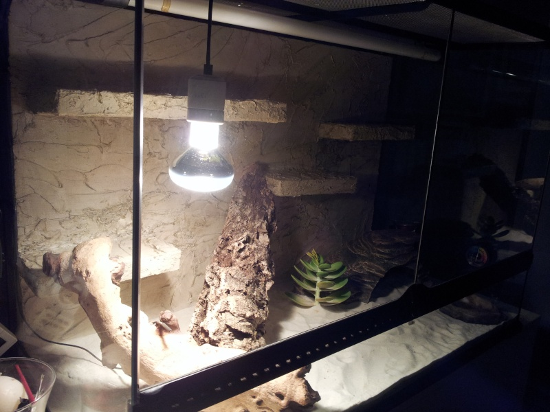 preparation terrarium 20120822
