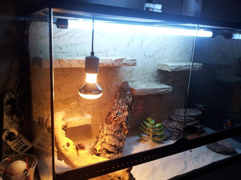 preparation terrarium 20120823