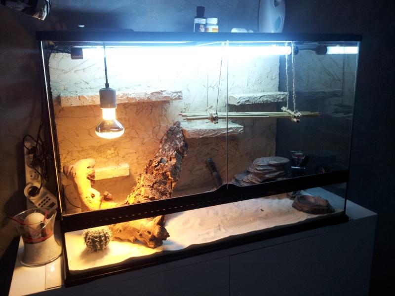 preparation terrarium 20120824
