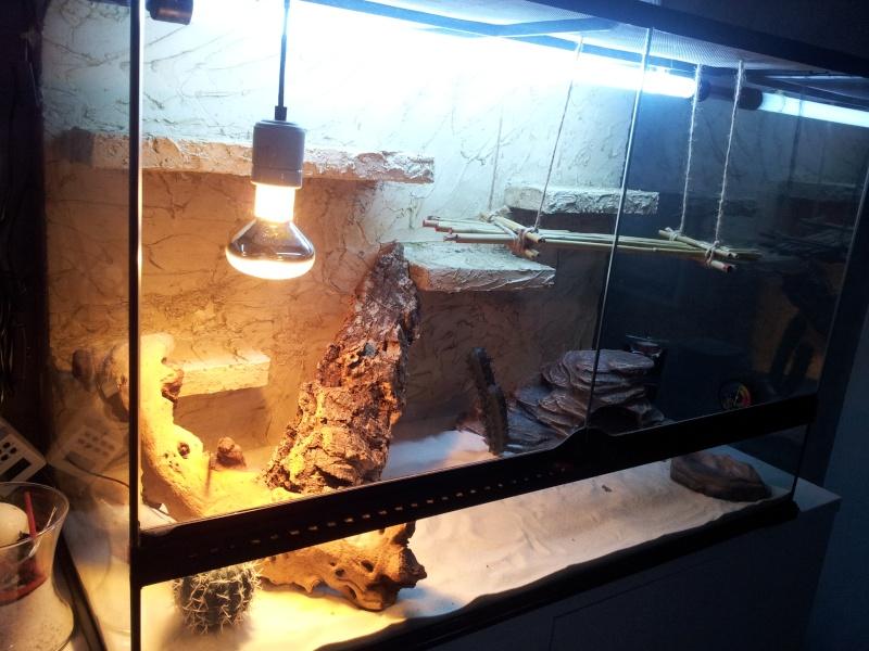 preparation terrarium 20120825