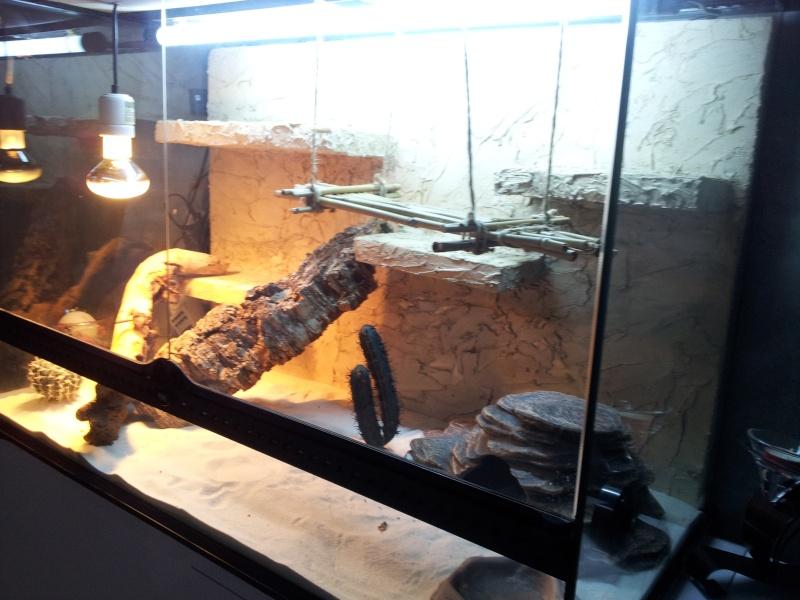 preparation terrarium 20120826