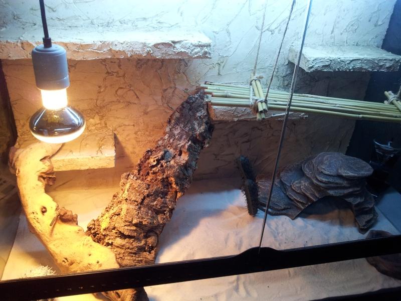 preparation terrarium 20120827