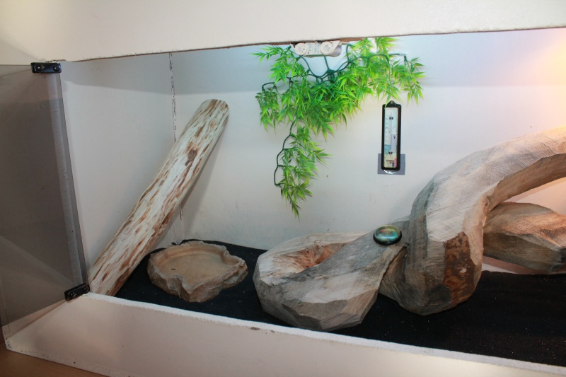 Mon terrarium (quelques Modif à venir) Img_1111
