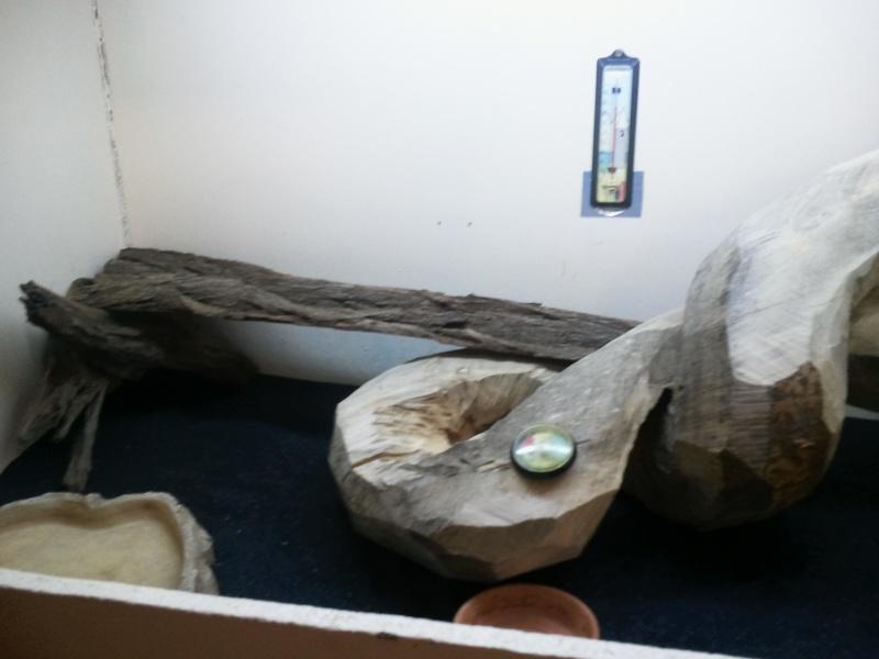 Mon terrarium (quelques Modif à venir) Photo010