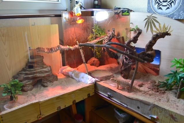 le terrarium à Mango* Dsc_0610