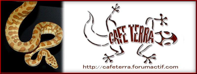 Café-terra