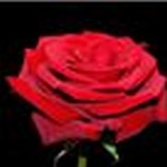 Ô fleur d'immortalité Imag-110