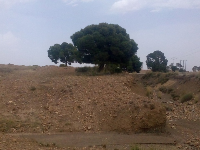 Hafit continue à sillonner les différentes localités de Tebessa avec son ami Mokhtar.(Juin 2016) 124