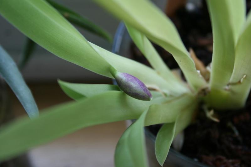 mon miltoniopsis : mise en bocal  (à la boyome ...) - Page 4 Img_3234