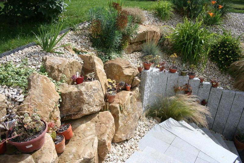 succulentes rempotées !!  Img_3243