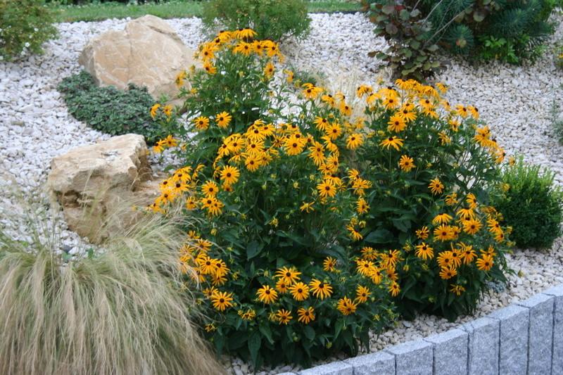 qq fleurs du jardin Img_3321