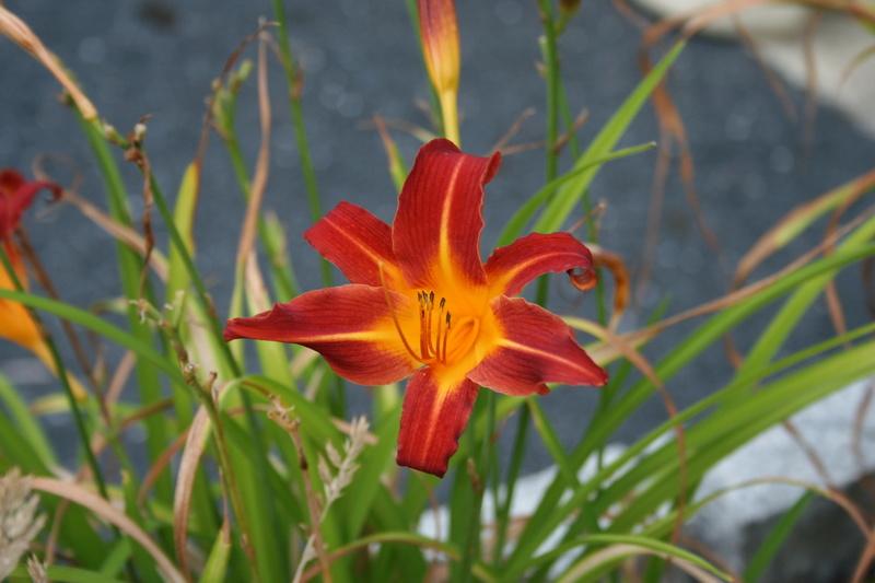 qq fleurs du jardin Img_3323