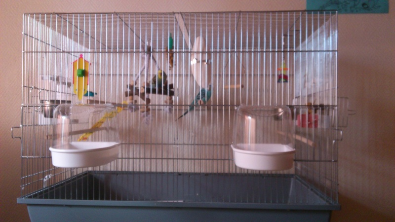 Photo de la cage Dsc_0217