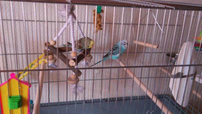 Photo de la cage Dsc_0218