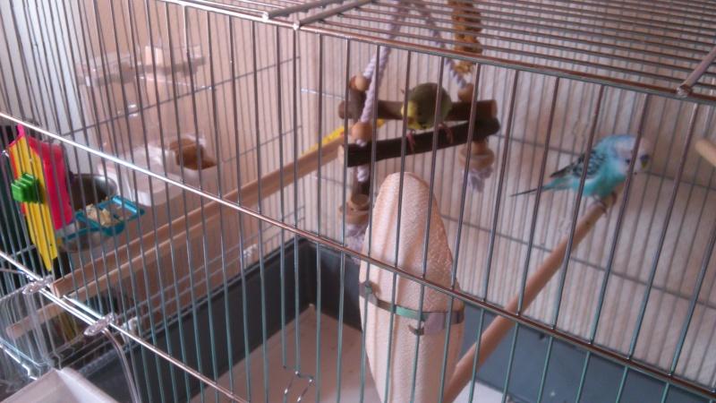 Photo de la cage Dsc_0219