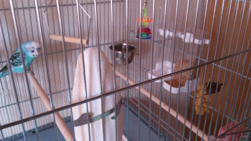 Photo de la cage Dsc_0220