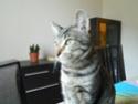 Hippy, notre petit chasseur de salon Dscn2711