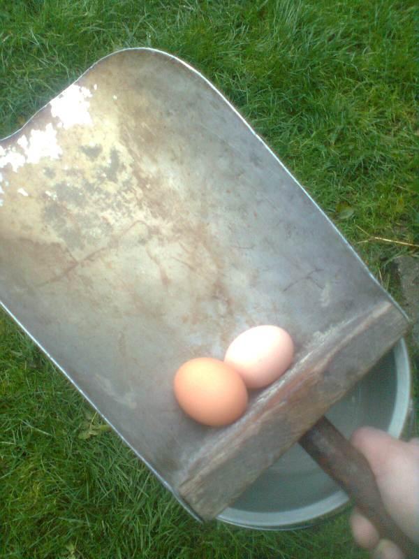 Les outils qu'on utilisait pour fabriquer de l'aliment pour bétail.  Oeufs10