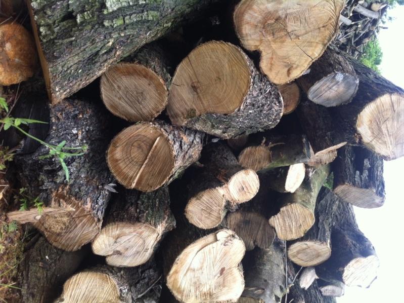 Vends bois d'olivier Img_0510