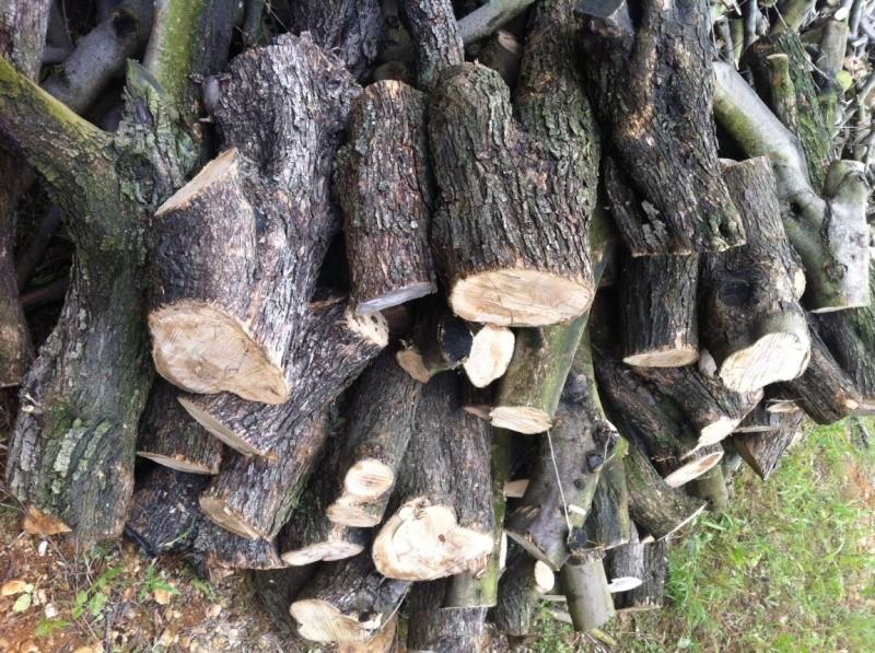 Vends bois d'olivier Img_0511