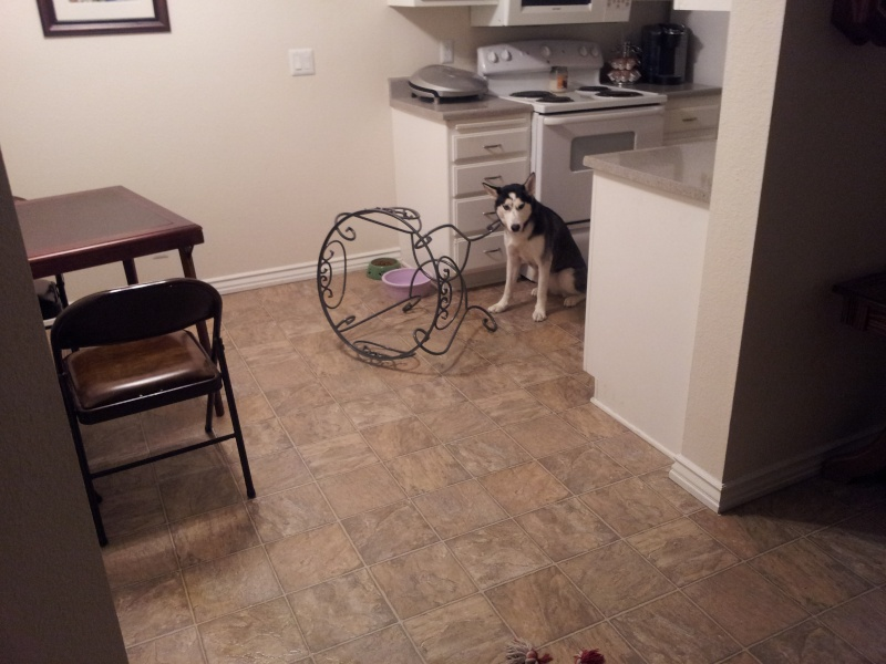 Classic Photos Of Your Huskies - Page 2 20111210