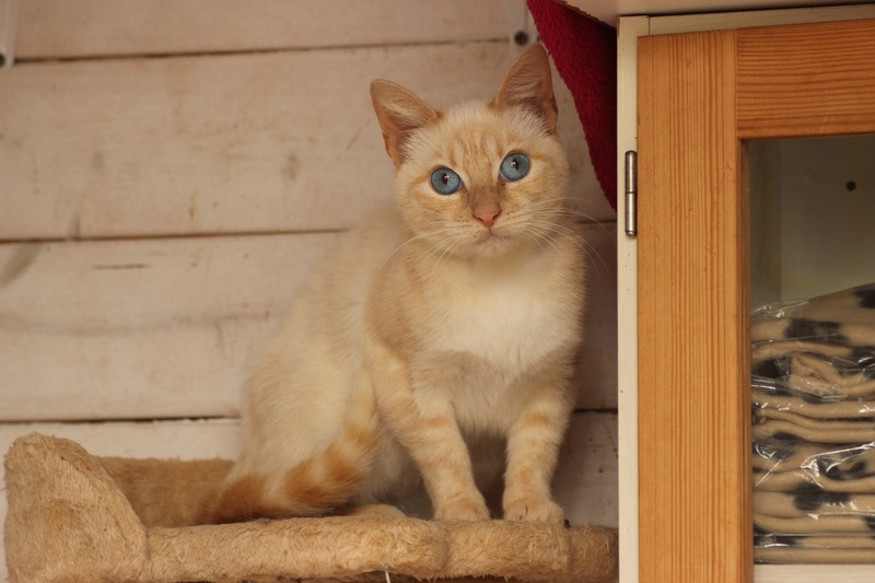 SNOWBELL Img_1331