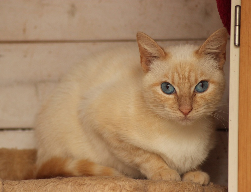 SNOWBELL Img_1333