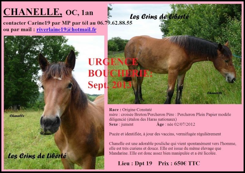 (Dept19) CHANELLE DE PIERREFIT, Trait OC, réservée par xtrama (Septembre 2013) - Page 2 Chanel10