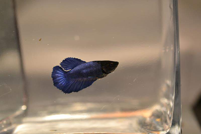 HMVL BF Bleu Roi * HMVL Bleu Acier - Page 2 Fb_img15