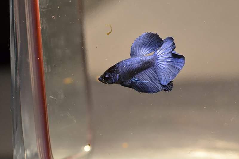 HMVL BF Bleu Roi * HMVL Bleu Acier - Page 2 Fb_img20