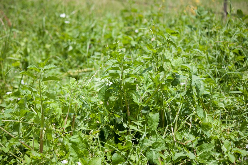 Prairie avec peu d'herbe Img_0410