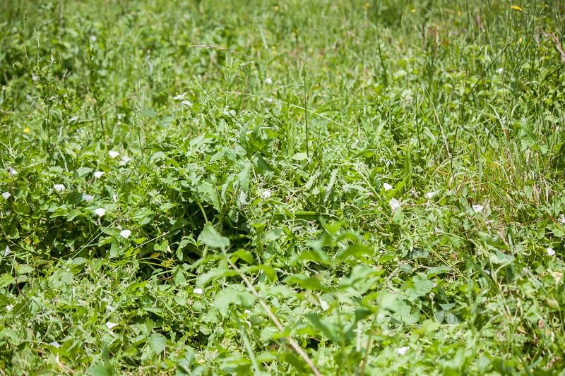 Prairie avec peu d'herbe Img_0411