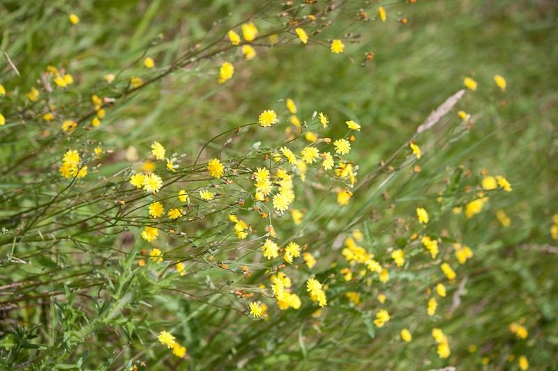 Prairie avec peu d'herbe Img_0415