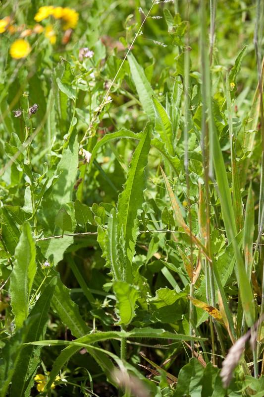 Prairie avec peu d'herbe Img_0417