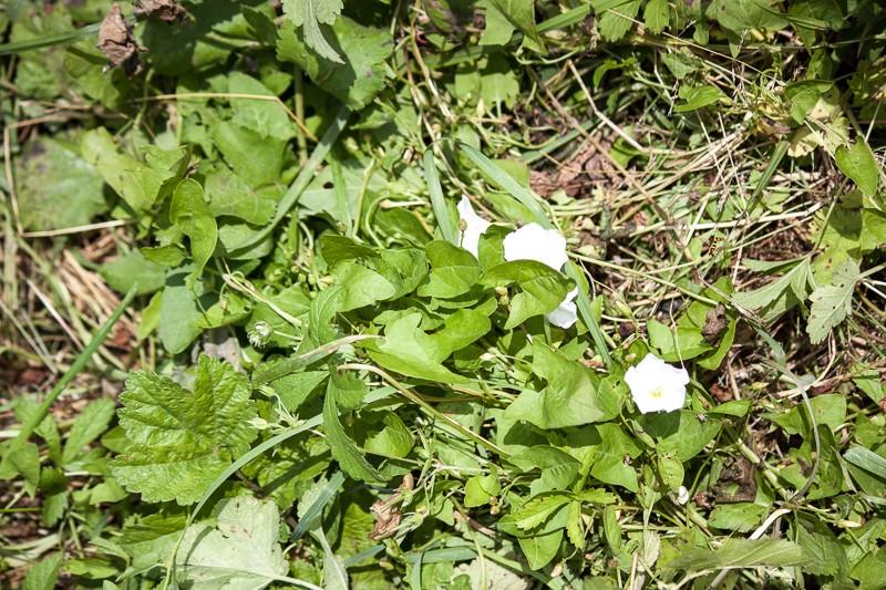 Prairie avec peu d'herbe Img_0418
