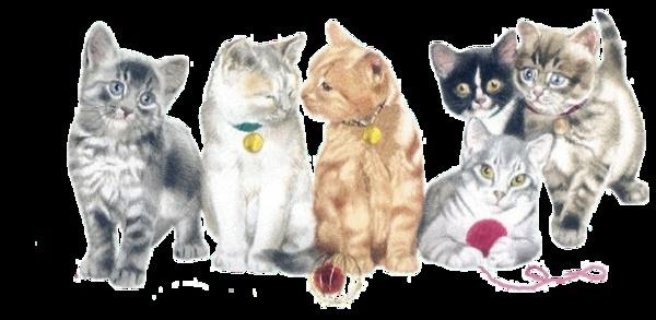 2 nouveaux chatons 5b1nli10