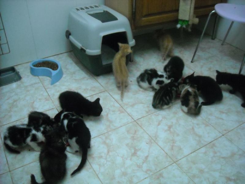 les chatons en nursery Dscn3413