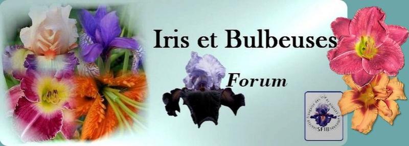 Iris et autres fleurs à bulbes