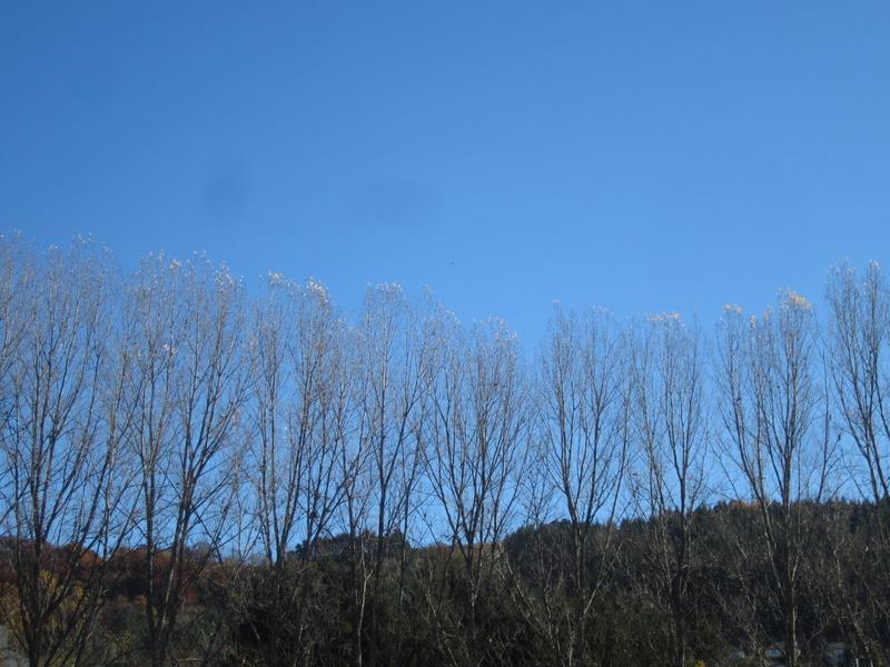 Riom-Es-Montagnes et alentours - Page 5 Fabie169