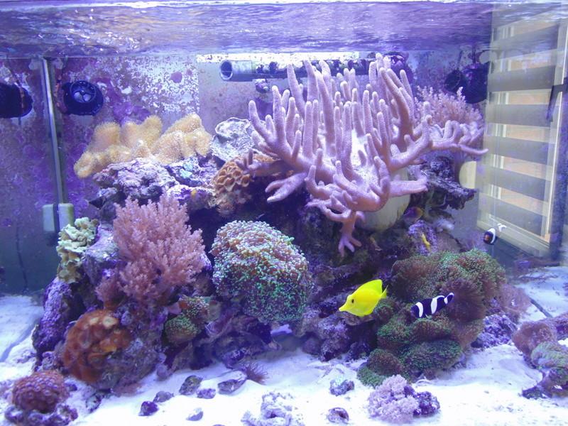 mon nouvel aquarium  - Page 7 Dsc07810